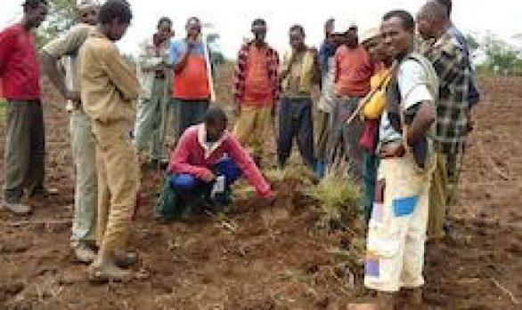 Gedo-Fincha-Lemlem, Ethiopia